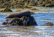 Island-Tiere
