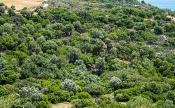 Kreta-Landschaft