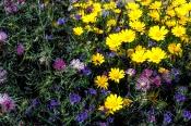 Mediterrane Blütenvielfalt