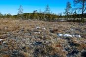 Es gibt viele, riesige Moor-Areale