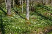 In Südschweden ist schon Frühling