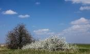 Vor-Frühling