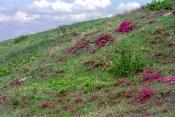 Frühlingsaspekt in der Siegendorfer Puszta