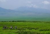 Gras-Landschaft