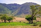 Im Ngorongoro-Krater