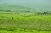Maasai-Gebiet nordwestlich des Ngorongoro-Kraters