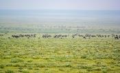 Serengeti-Ebene