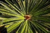 Türkei-Pflanzen